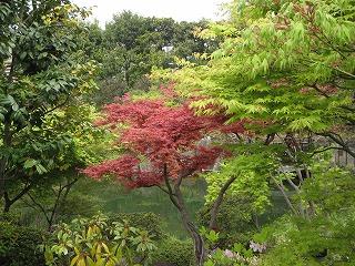 都会のオアシス「目白庭園」