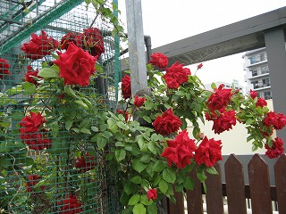 屋上庭園5