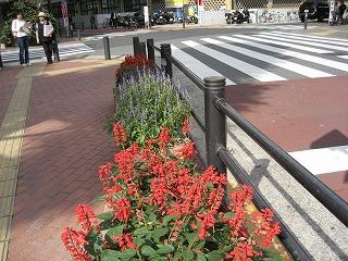 公会堂前のお花0710