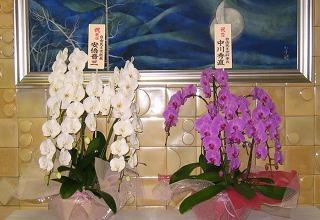 党本部正面玄関、安倍首相から太田代表誕生のお祝いのお花