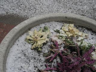 080123雪