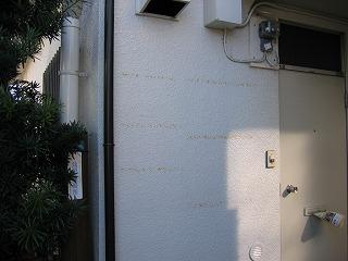 アパートの壁、新しく塗装した上に張っていて、後が残ってしまいました。
