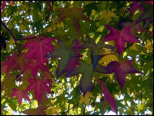 fall-17.jpg