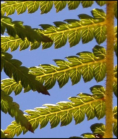 fern-sec.jpg