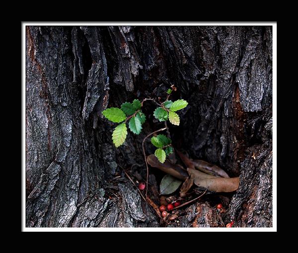 leaves-tr.jpg