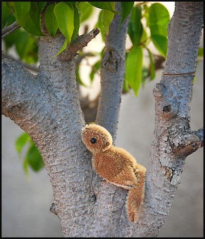 mon-tree.jpg