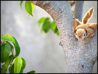 mon-tree3.jpg