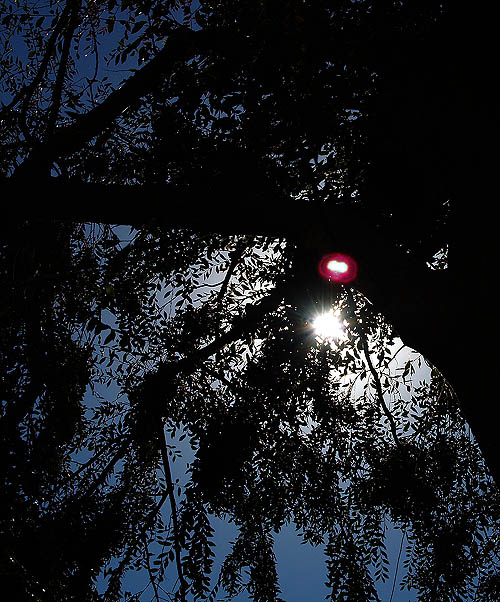 tree1204.jpg