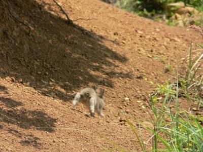 野生ノウサギ