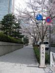 日本銀行前の桜並木