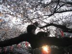 上野恩賜公園の猫