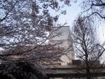 劉一華記念公園のソメイヨシノ