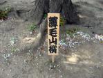 浜離宮の桜の看板