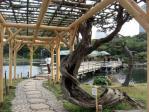 浜離宮の藤の木