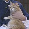 西乃屋の猫