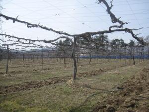 3月30日の林農園