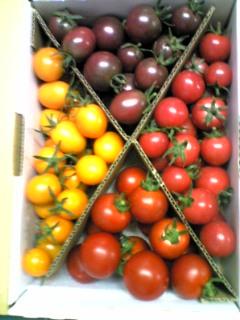 フルーツトマト4種類