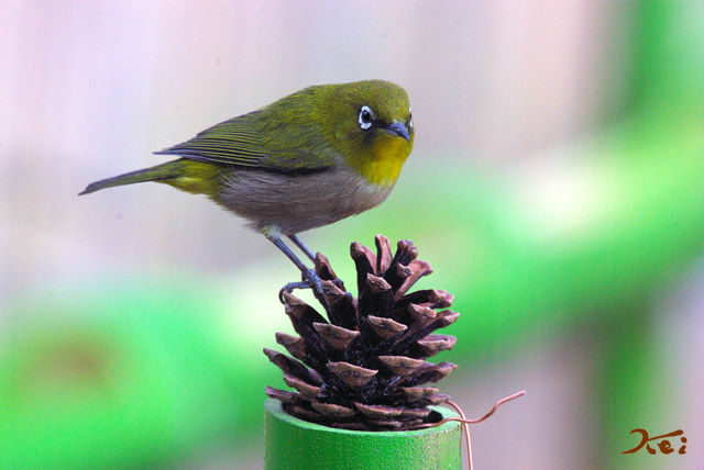高崎野鳥の森02