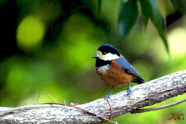 高崎野鳥の森03