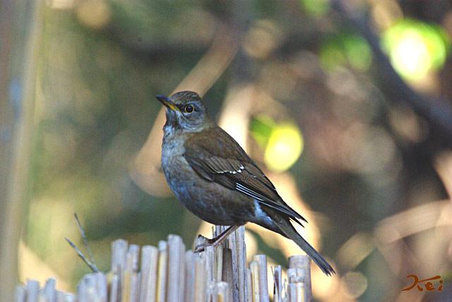 高崎野鳥の森06
