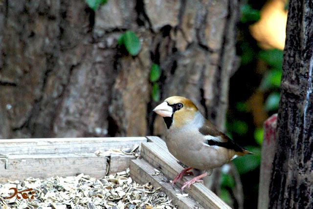 高崎野鳥の森07