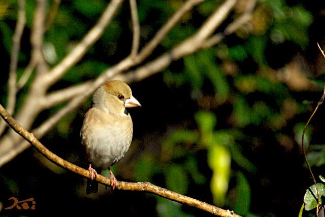 高崎野鳥の森08