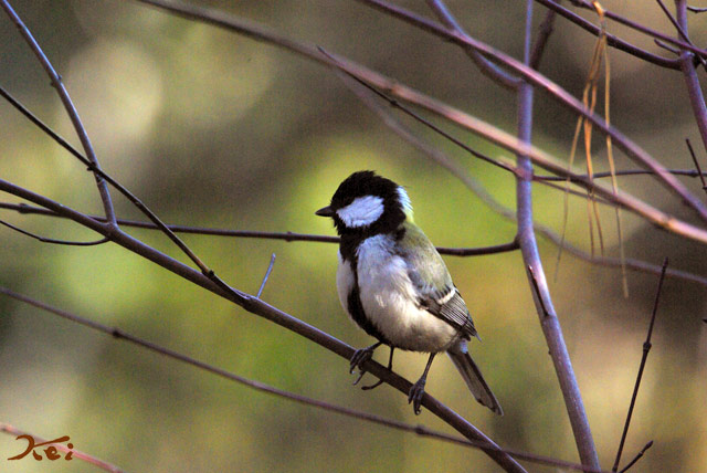 高崎野鳥の森09