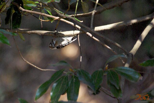 高崎野鳥の森10