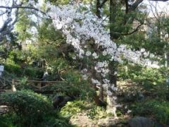 090330須藤公園2