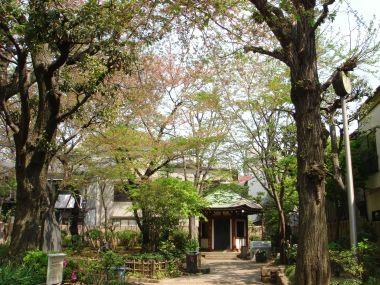 090413岡倉天心記念公園