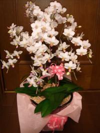 090701花
