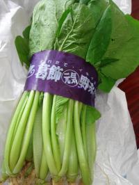 090704小松菜