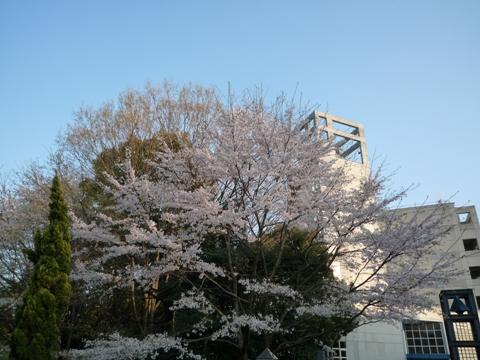100408_03桜_正門前
