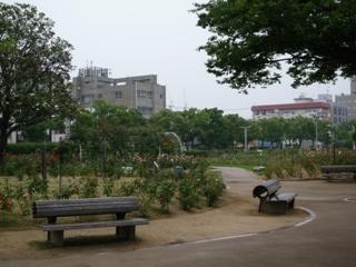 100625_38ばら公園