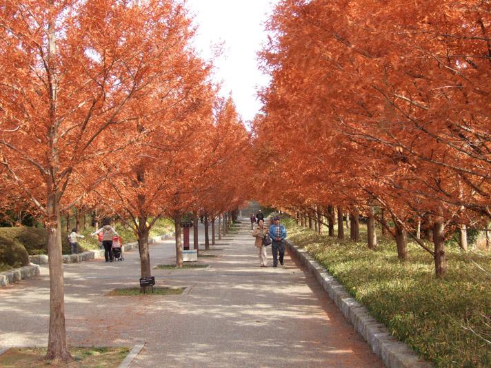 20051126_森林植物園1