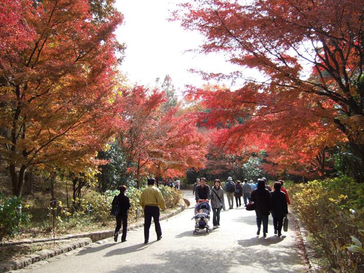 20051126_森林植物園4