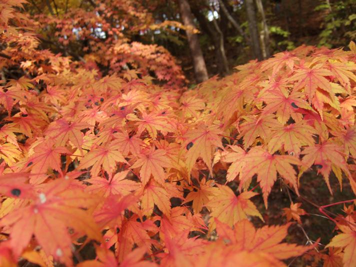 20051126_森林植物園7