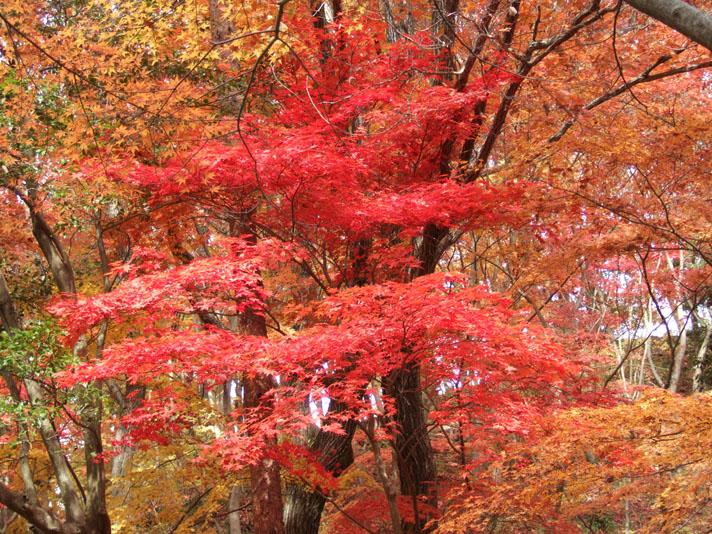 20051126_森林植物園8