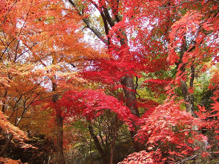 20051126_森林植物園9