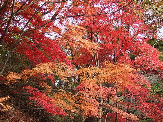 20051126_森林植物園10