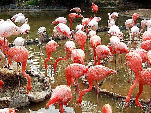 王子動物園_2006092503