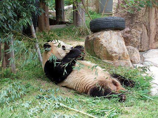 王子動物園_2006092504