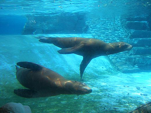 王子動物園_2006092506