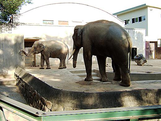 王子動物園_2006092513