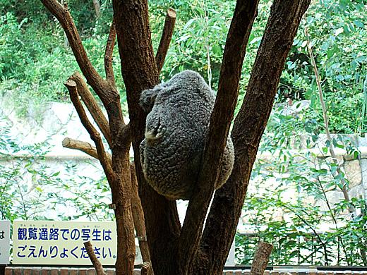 王子動物園_2006092514