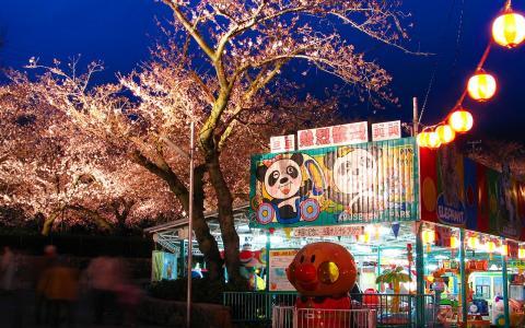 王子動物園夜桜通り抜け/桜のライトアップ