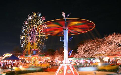 桜のライトアップ/神戸市立王子動物園・夜桜通り抜け
