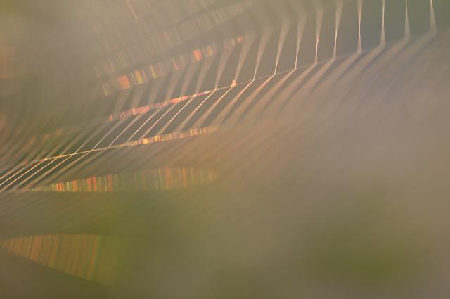 20090820-2.jpg