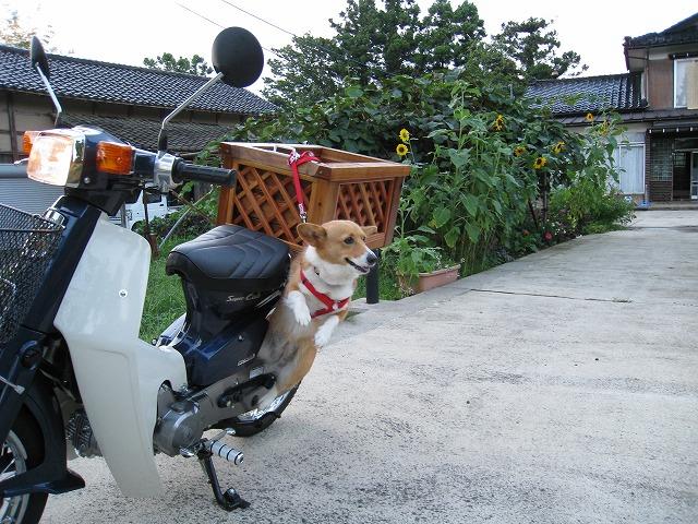 バイクに乗って20m