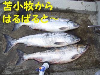 9 19 sake1